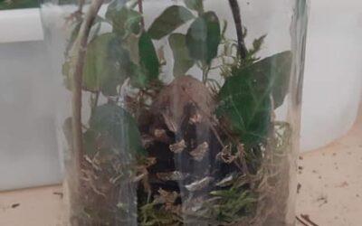 las wsłoiku